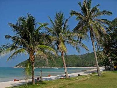 koh-phangan palms
