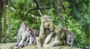 monkeys Adventure Activity