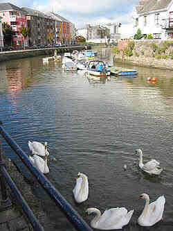 swans-Waterford County Waterford